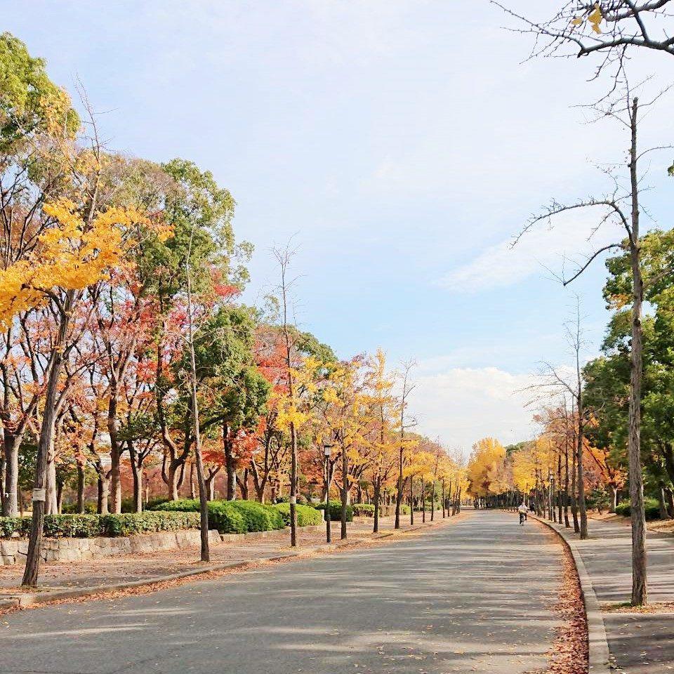大阪城公園銀杏並木